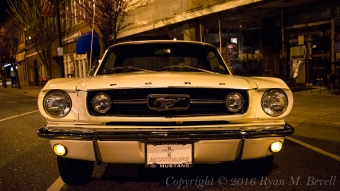 Mustang Front Copyright